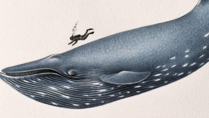 El dilema de las ballenas